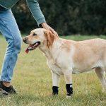 Leg-Splint-Braces-pic2